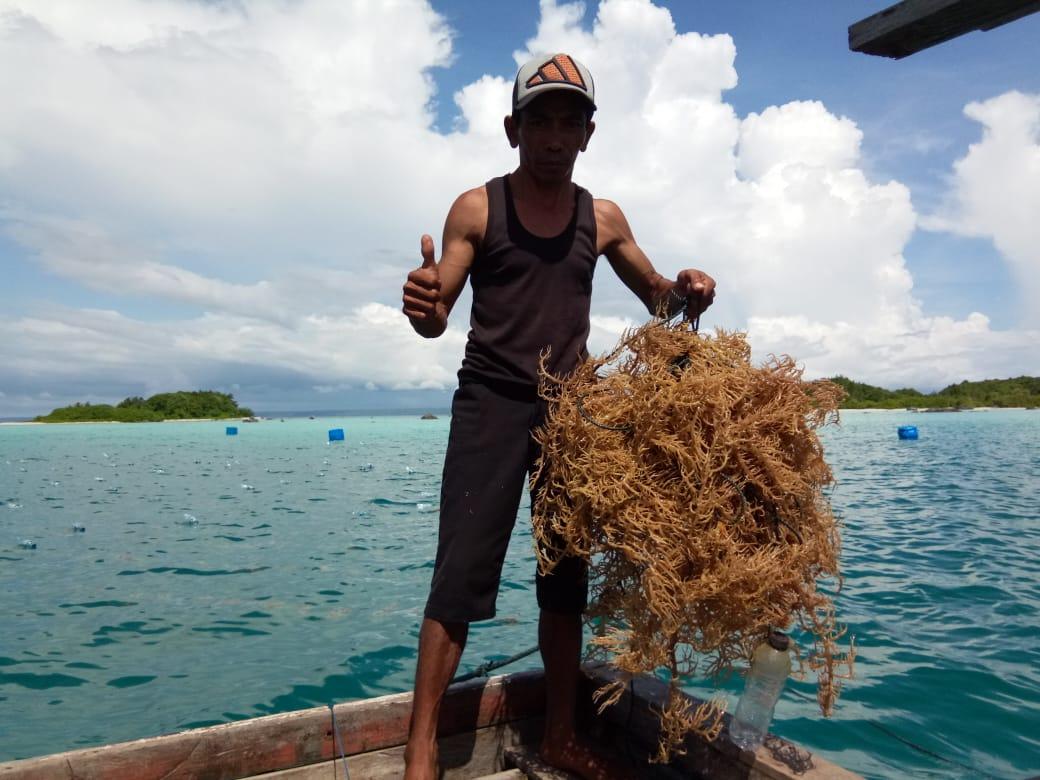 Iwan Setiawan Rintis Budidaya Rumput Laut di Pulau Wunga